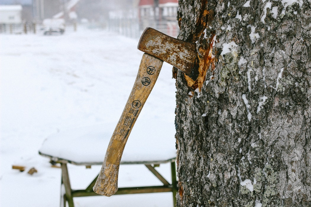 How To Become An Arborist_ Useful Q&A's